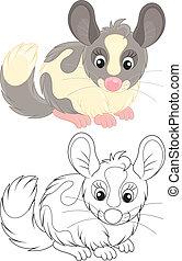 Chinchilla - Funny fluffy chinchilla, color and...