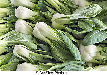 Chinese Cabbage Bok Choy