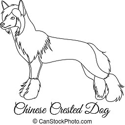 Chinese crested dog outline vector illustration