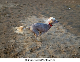 Dog runs on sand