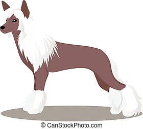 Chinese crested dog vector illustration