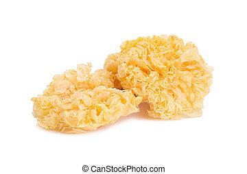 Chinese food tremella fuciformis white fungus isolated.