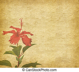 chinese hibisci Rosae-Sinensis Flower with set of abstract ...