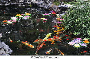 Chinese Koi pond in Shanghai China