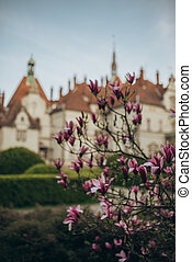 chinese magnolia bush on the background of a blurred castle