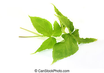 """Ban Xia - Chinese medicinal herb """"Ban Xia"""" in front of white..."""