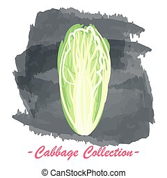 Chinese pekin vector isolated cabbage on a grunge background