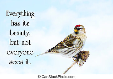 Chinese proverb about beauty in nature, with a pretty male common redpoll bird perched on a dead daisy stalk, eating seeds in the winter.