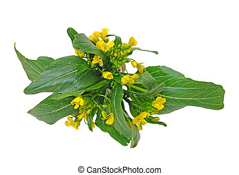 Chinese spinach flower