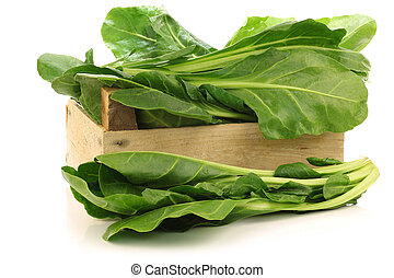 chinese spinach (Ipomoea aquatica)