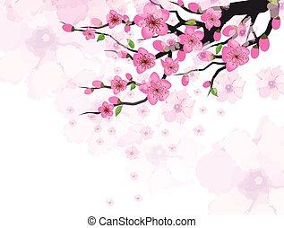 chinesisches , blüte, pflaume, jahr, neu , karte