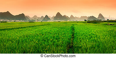 chinois, formations, champ, coucher soleil, riz, karst