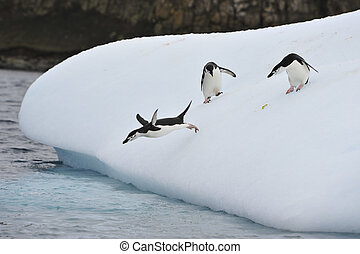 Chinstrap Penguin in Anatcrtica - Chinstrap penguin on the...