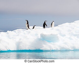 Chinstrap penguins, Pygoscelis antarcticus, standing on ice...