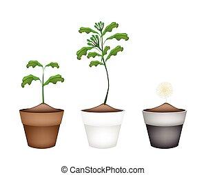 chiodo di garofano, fiore, ceramica, otri, pianta, fresco