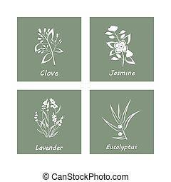 chiodo di garofano, naturale, gelsomino, eucalipto, ...