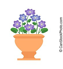 Chionodoxa Pot with Flowers Vector Illustration