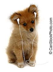 chiot, à, mp3, écouteurs