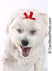 chiot, bâiller, chien