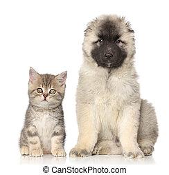 chiot, chaton
