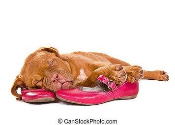 chiot, chaussures, femme, dormir
