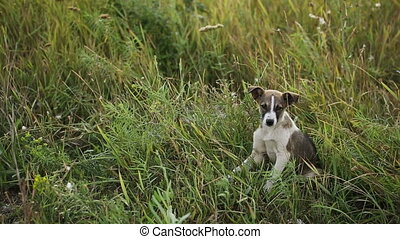 chiot, herbe