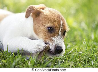 chiot, mastication, os chien, heureux