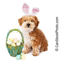 chiot, paques, havanese, lapin