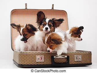 chiots, valise