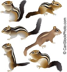 Chipmunk - Collection of chipmunks in colour image