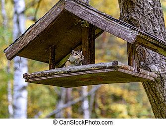 Chipmunk sitting in a bird feeder