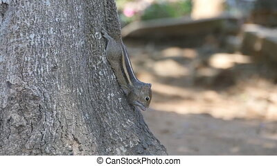 Chipmunk sitting on a tree trunk in the park and eating...