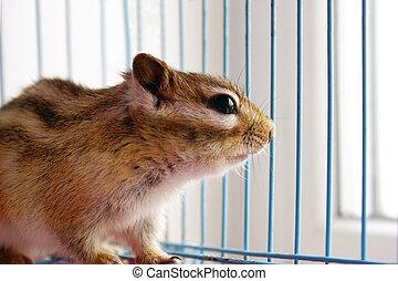 Chipmunk staring through cage rods