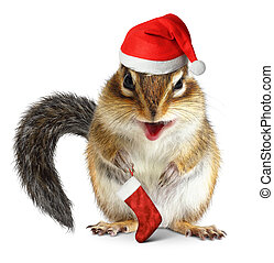 Chipmunk with Santa Claus hat and gift sock on white background