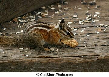 Chippie with Peanut