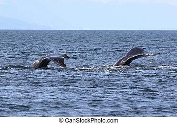 Chiripas, ballena, jorobado, dos
