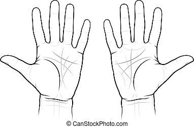 chiromancy, gráfico, palmas