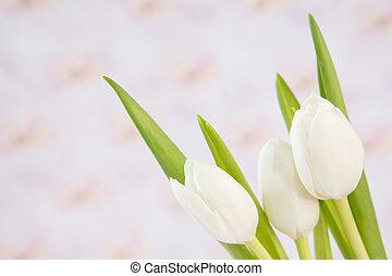 chiudere, bello, tulips, tre, bianco, su