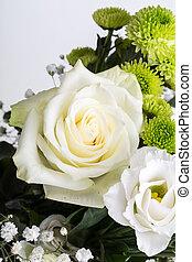 chiudere, bianco, su, rose