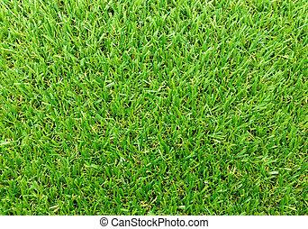 chiudere, erba, verde, su, fondo