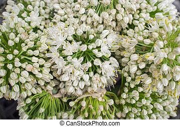 chiudere, fiori, su, cipolla