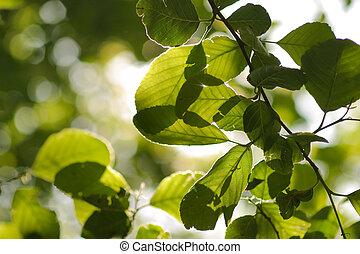 chiudere, foglie, albero, su