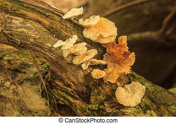 chiudere, profondo, su, fungo, foresta