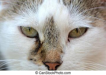 chiudere, testa, su, gatto