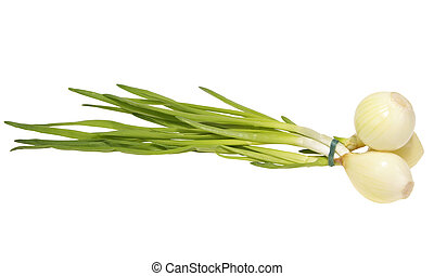 chive - Chive bounded in bunch isolated on white background