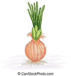 chive - unique style illustration of chive. Scientific name...