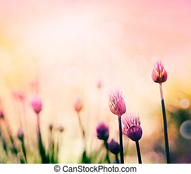 Chives flowers - Fresh chives flower over colorful ...