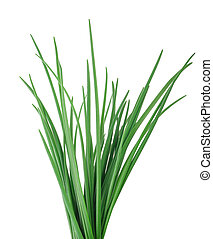 Chives  isolated on white background
