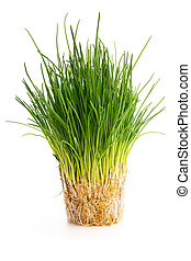 Chives plant with roots isolated on white