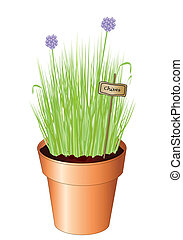 Chives - Vector illustration of potted chives isolated on ...